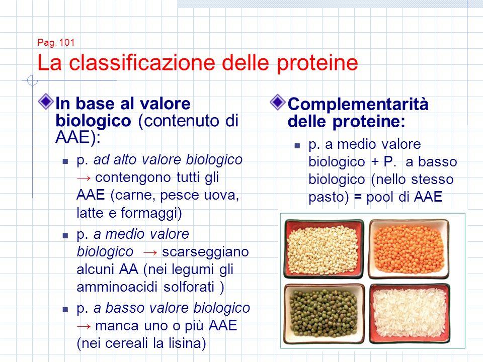 Pag. 101 La classificazione delle proteine In base al valore biologico (contenuto di AAE): p. ad alto valore biologico contengono tutti gli AAE (carne