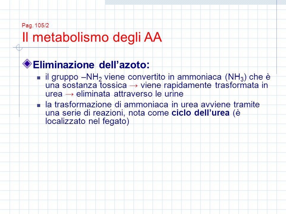 Eliminazione dellazoto : il gruppo –NH 2 viene convertito in ammoniaca (NH 3 ) che è una sostanza tossica viene rapidamente trasformata in urea eliminata attraverso le urine la trasformazione di ammoniaca in urea avviene tramite una serie di reazioni, nota come ciclo dellurea (è localizzato nel fegato) Pag.