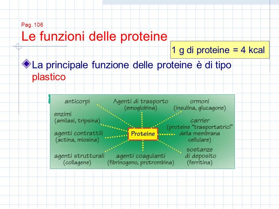 Pag. 106 Le funzioni delle proteine La principale funzione delle proteine è di tipo plastico 1 g di proteine = 4 kcal