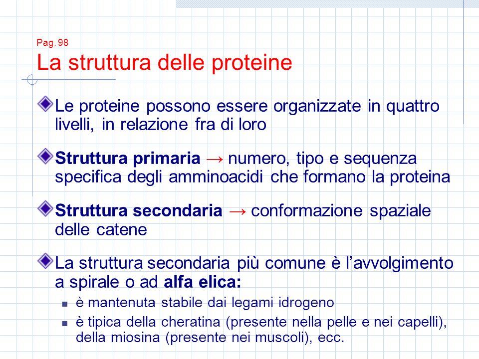Le proteine possono essere organizzate in quattro livelli, in relazione fra di loro Struttura primaria numero, tipo e sequenza specifica degli amminoa