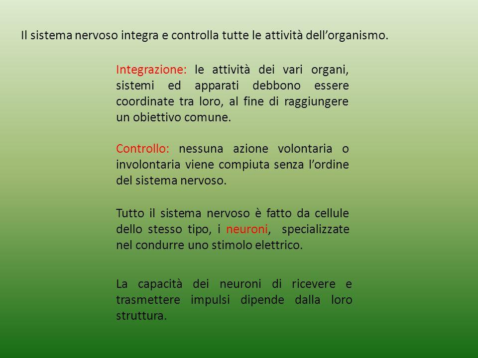 Il sistema nervoso integra e controlla tutte le attività dellorganismo.
