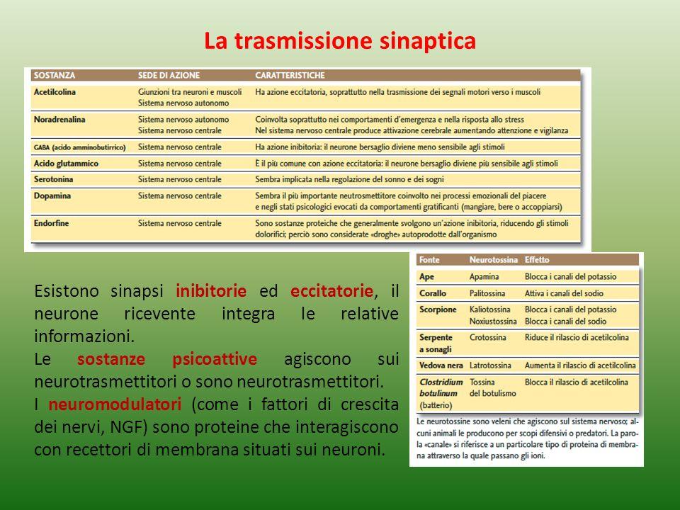 Esistono sinapsi inibitorie ed eccitatorie, il neurone ricevente integra le relative informazioni.