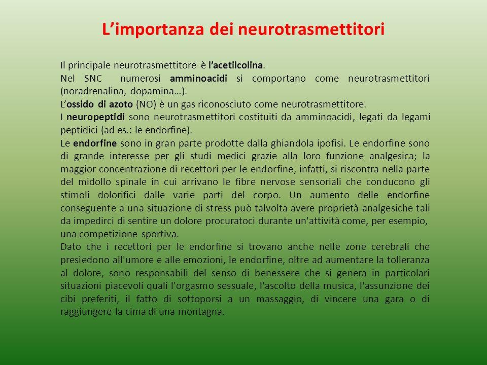 Limportanza dei neurotrasmettitori Il principale neurotrasmettitore è lacetilcolina.