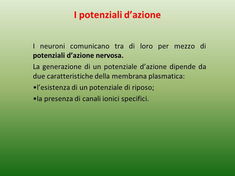 I potenziali dazione I neuroni comunicano tra di loro per mezzo di potenziali dazione nervosa.