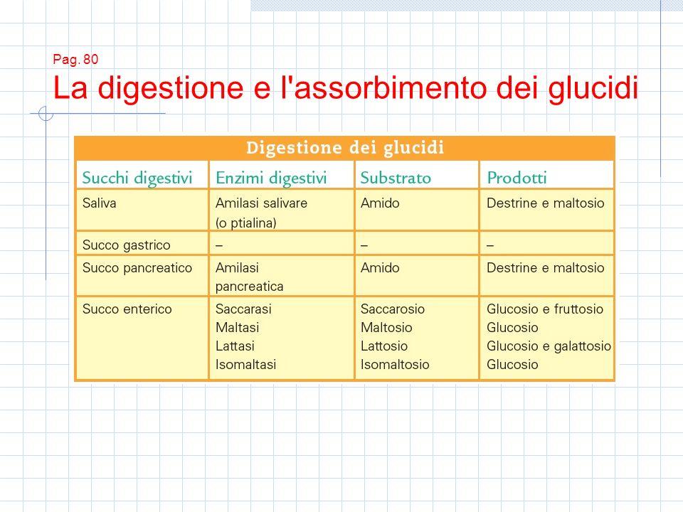 Pag. 80 La digestione e l'assorbimento dei glucidi