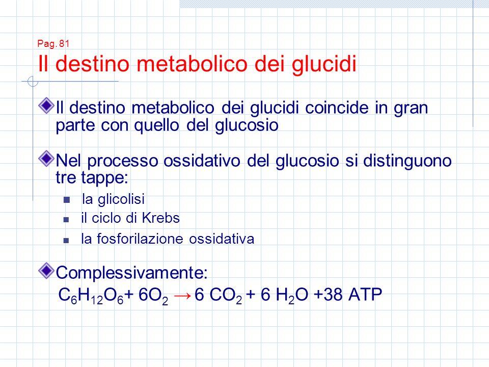 Pag. 81 Il destino metabolico dei glucidi Il destino metabolico dei glucidi coincide in gran parte con quello del glucosio Nel processo ossidativo del