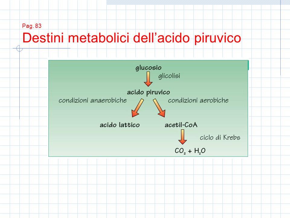 Pag. 83 Destini metabolici dellacido piruvico
