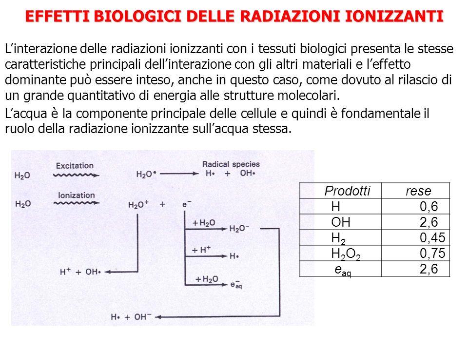 EFFETTI BIOLOGICI DELLE RADIAZIONI IONIZZANTI Linterazione delle radiazioni ionizzanti con i tessuti biologici presenta le stesse caratteristiche prin