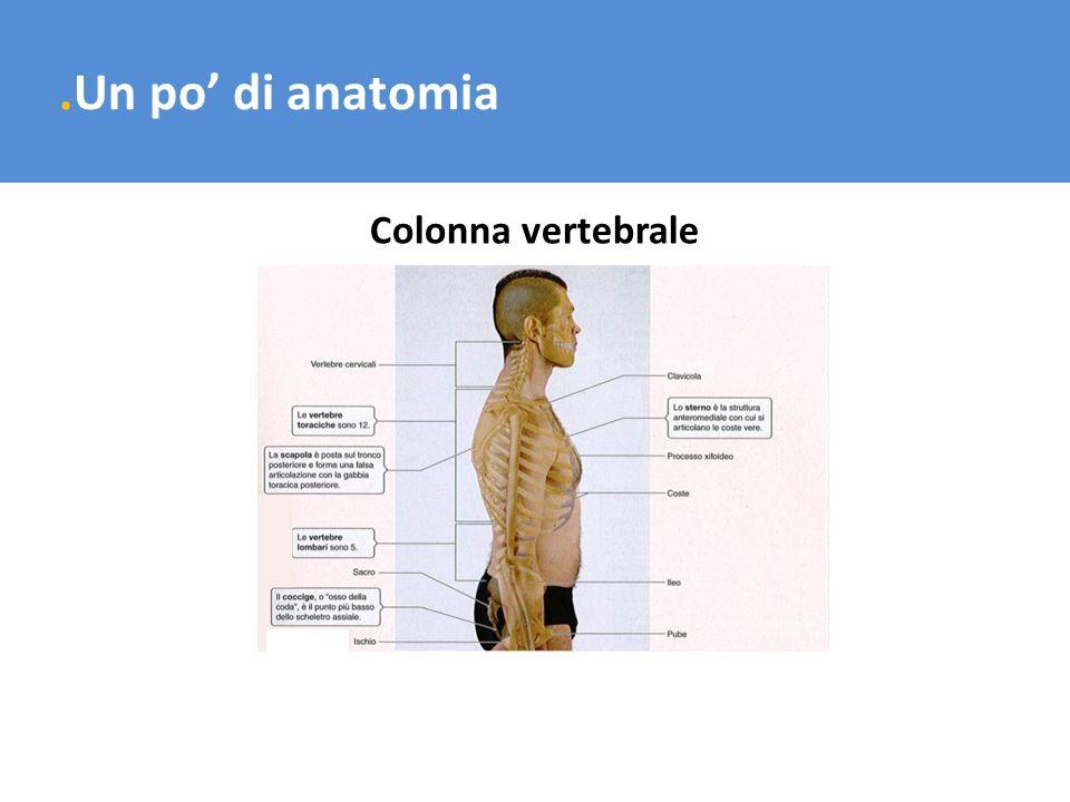 .Un po di anatomia Colonna vertebrale