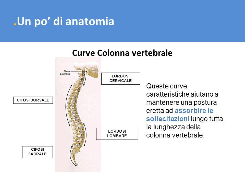 .Un po di anatomia Curve Colonna vertebrale Queste curve caratteristiche aiutano a mantenere una postura eretta ad assorbire le sollecitazioni lungo t