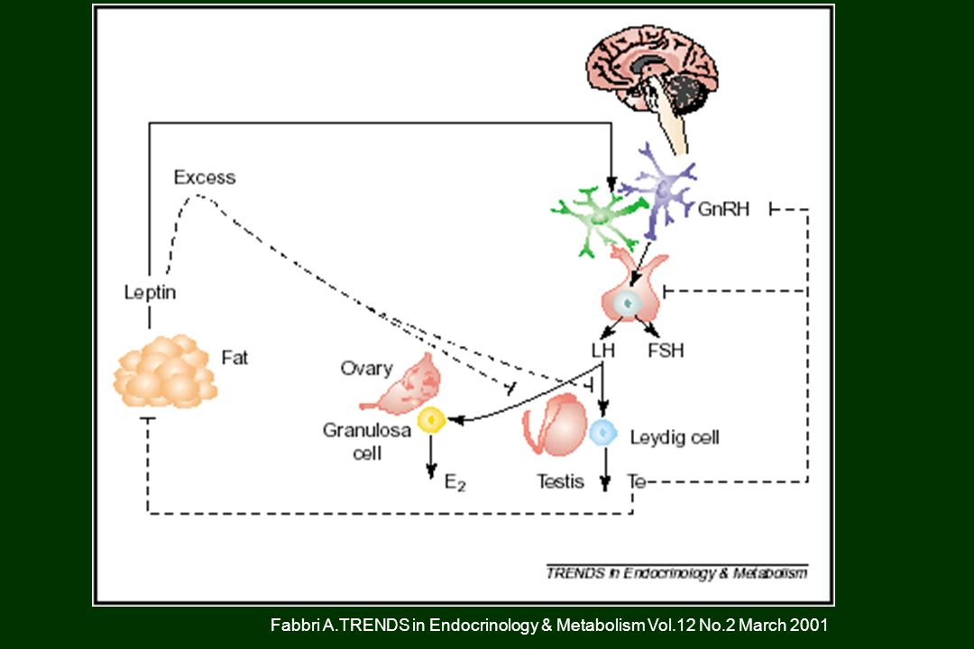 Fabbri A.TRENDS in Endocrinology & Metabolism Vol.12 No.2 March 2001