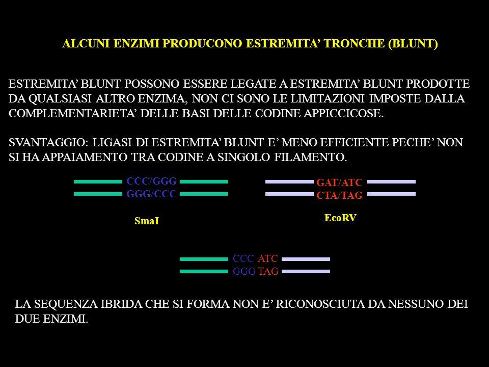 ALCUNI ENZIMI PRODUCONO ESTREMITA TRONCHE (BLUNT) ESTREMITA BLUNT POSSONO ESSERE LEGATE A ESTREMITA BLUNT PRODOTTE DA QUALSIASI ALTRO ENZIMA, NON CI S