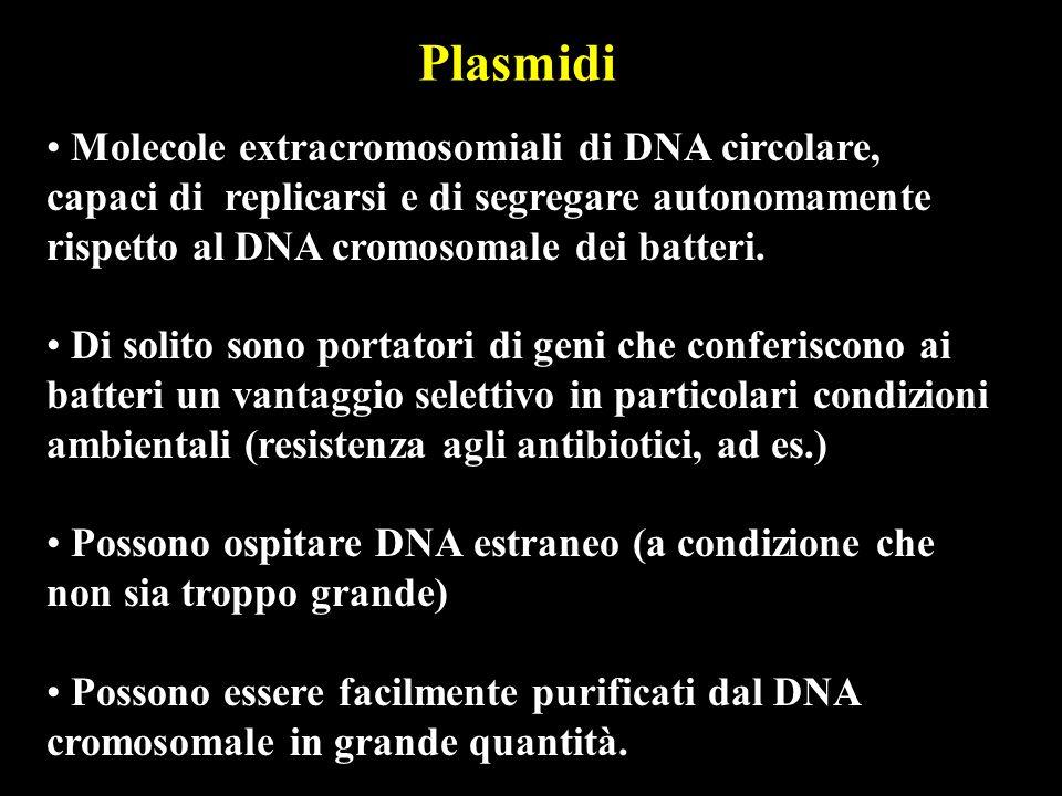 Plasmidi Molecole extracromosomiali di DNA circolare, capaci di replicarsi e di segregare autonomamente rispetto al DNA cromosomale dei batteri. Di so