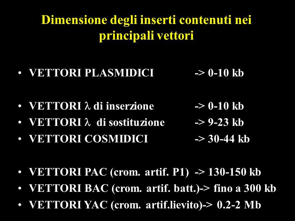 VETTORI PLASMIDICI -> 0-10 kb VETTORI di inserzione -> 0-10 kb VETTORI di sostituzione-> 9-23 kb VETTORI COSMIDICI-> 30-44 kb VETTORI PAC (crom. artif