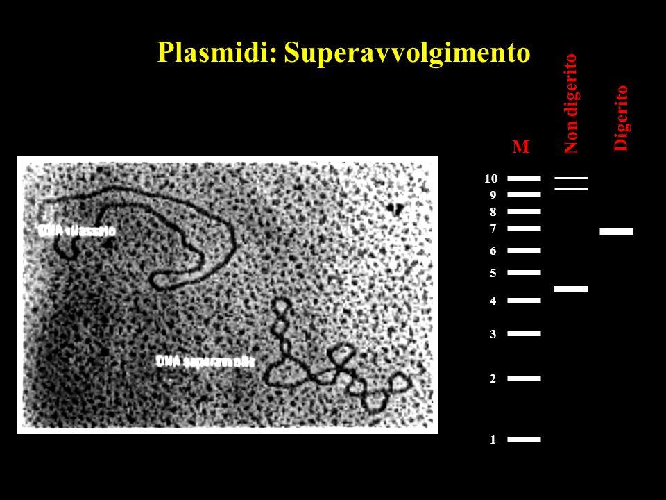 Plasmidi: Superavvolgimento M 1 2 3 4 5 6 7 8 9 10 Non digerito Digerito