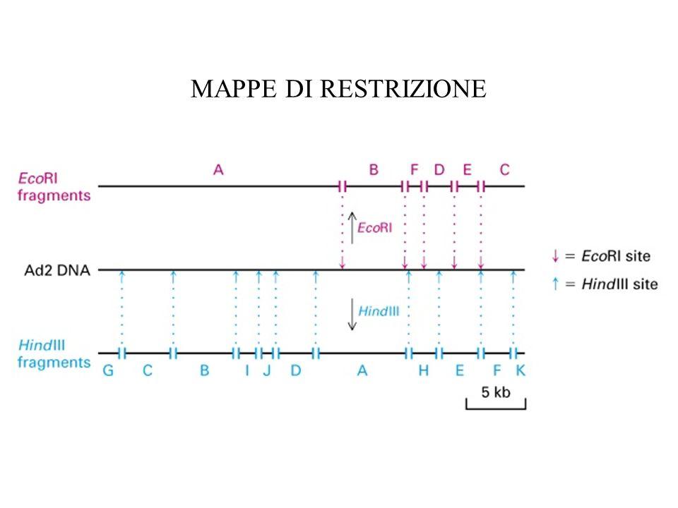 MAPPE DI RESTRIZIONE
