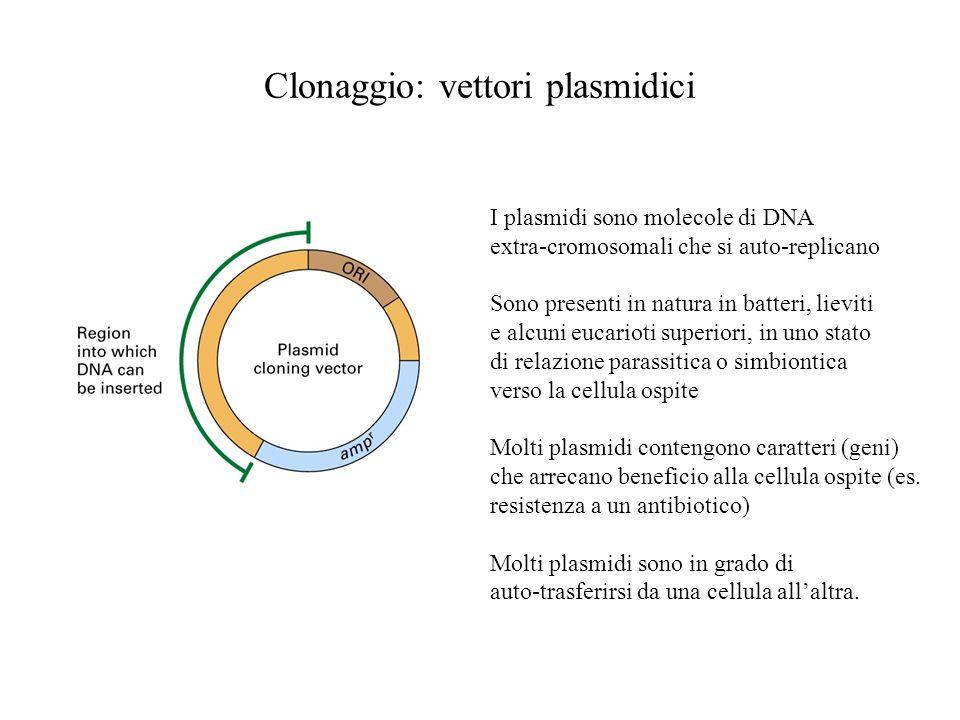 Clonaggio: vettori plasmidici I plasmidi sono molecole di DNA extra-cromosomali che si auto-replicano Sono presenti in natura in batteri, lieviti e alcuni eucarioti superiori, in uno stato di relazione parassitica o simbiontica verso la cellula ospite Molti plasmidi contengono caratteri (geni) che arrecano beneficio alla cellula ospite (es.