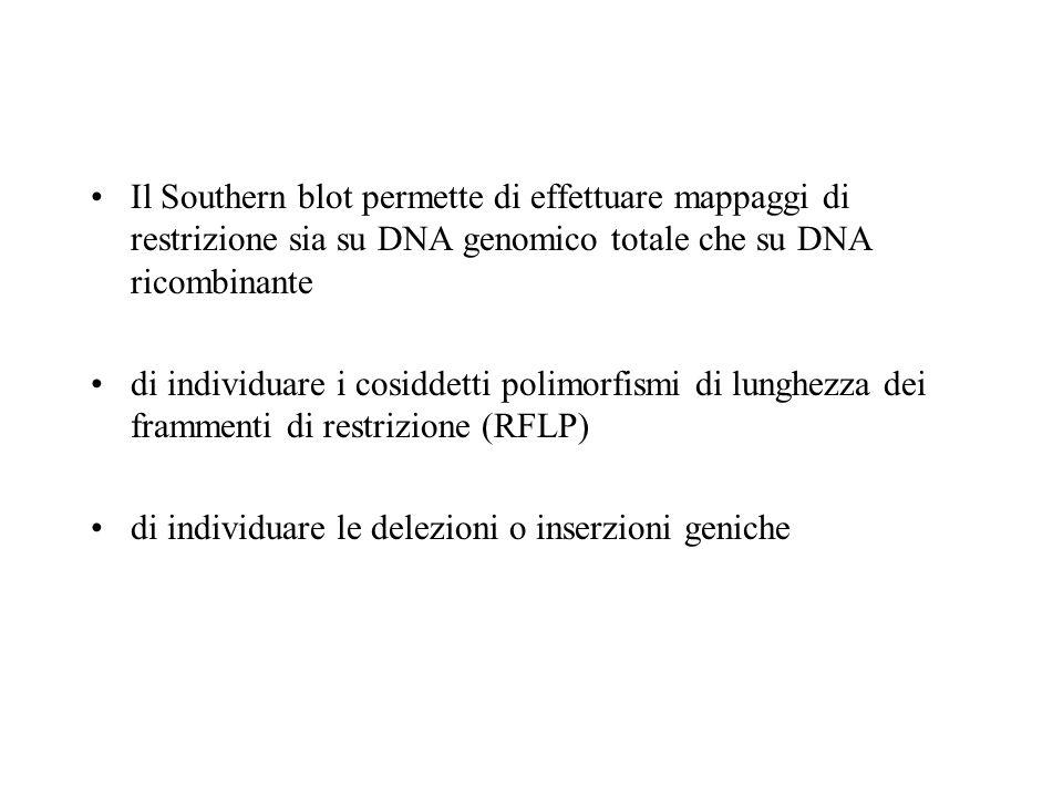 Il Southern blot permette di effettuare mappaggi di restrizione sia su DNA genomico totale che su DNA ricombinante di individuare i cosiddetti polimorfismi di lunghezza dei frammenti di restrizione (RFLP) di individuare le delezioni o inserzioni geniche