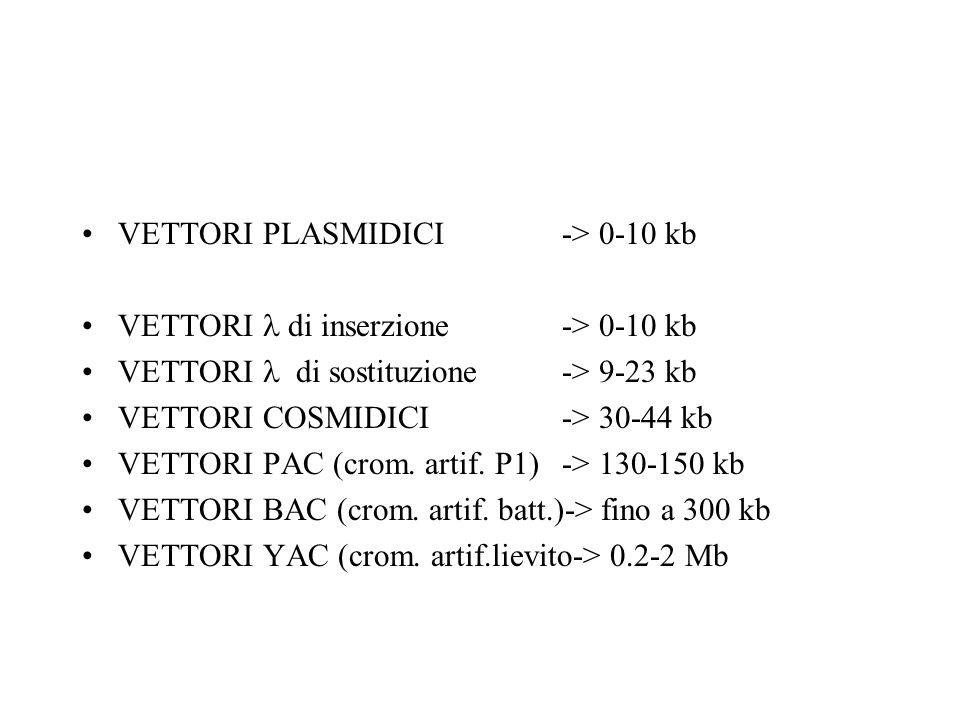 VETTORI PLASMIDICI -> 0-10 kb VETTORI di inserzione -> 0-10 kb VETTORI di sostituzione-> 9-23 kb VETTORI COSMIDICI-> 30-44 kb VETTORI PAC (crom.