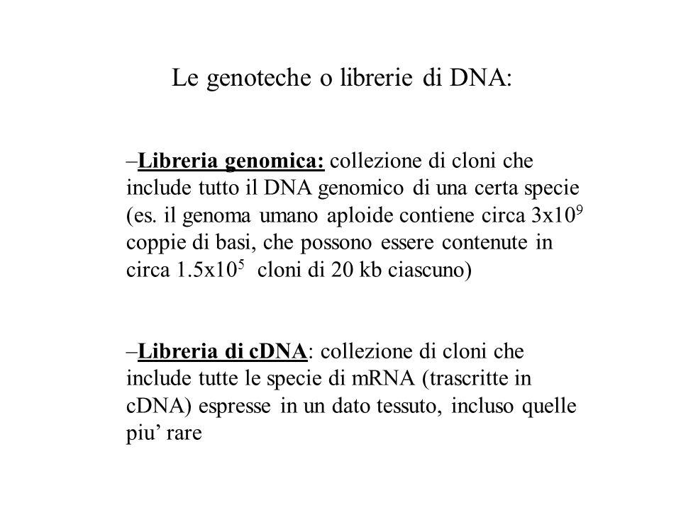 –Libreria genomica: collezione di cloni che include tutto il DNA genomico di una certa specie (es. il genoma umano aploide contiene circa 3x10 9 coppi
