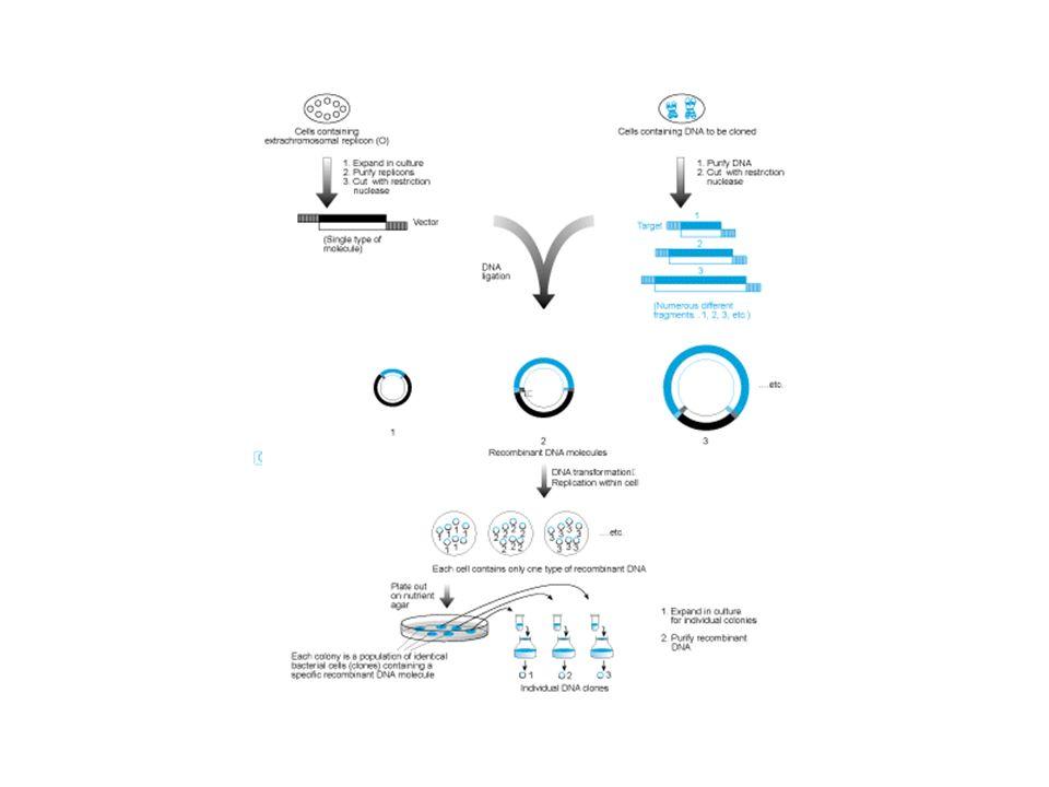 Costruzione di librerie genomiche utilizzando il fago come vettore