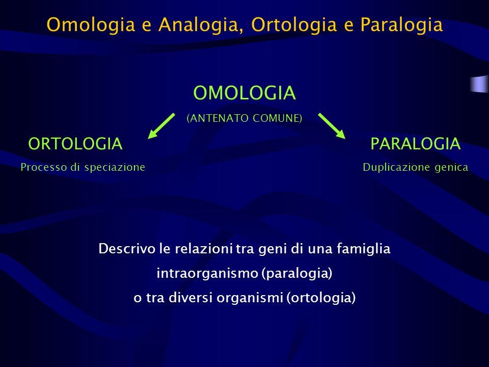 Omologia e Analogia, Ortologia e Paralogia OMOLOGIA (ANTENATO COMUNE) ORTOLOGIAPARALOGIA Processo di speciazioneDuplicazione genica Descrivo le relazi