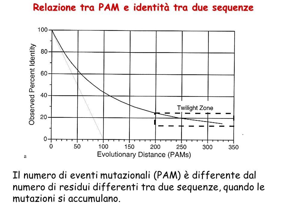 Relazione tra PAM e identità tra due sequenze Il numero di eventi mutazionali (PAM) è differente dal numero di residui differenti tra due sequenze, qu