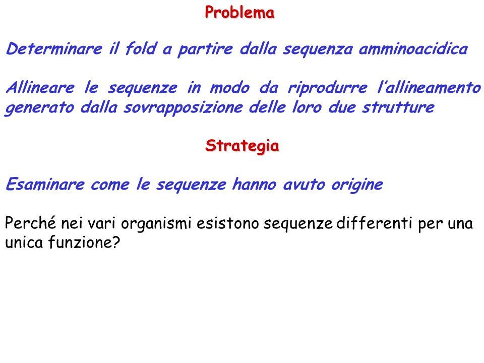 Problema Determinare il fold a partire dalla sequenza amminoacidica Allineare le sequenze in modo da riprodurre lallineamento generato dalla sovrapposizione delle loro due struttureStrategia Esaminare come le sequenze hanno avuto origine Perché nei vari organismi esistono sequenze differenti per una unica funzione?