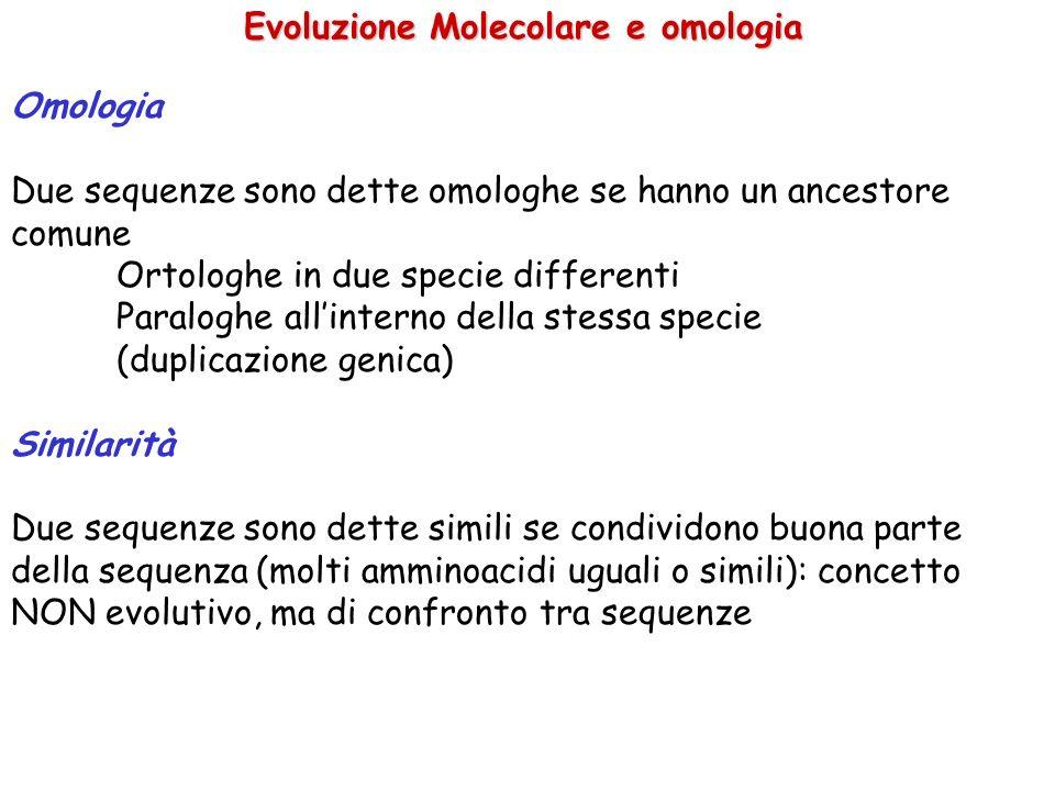 Evoluzione Molecolare e omologia Omologia Due sequenze sono dette omologhe se hanno un ancestore comune Ortologhe in due specie differenti Paraloghe allinterno della stessa specie (duplicazione genica) Similarità Due sequenze sono dette simili se condividono buona parte della sequenza (molti amminoacidi uguali o simili): concetto NON evolutivo, ma di confronto tra sequenze