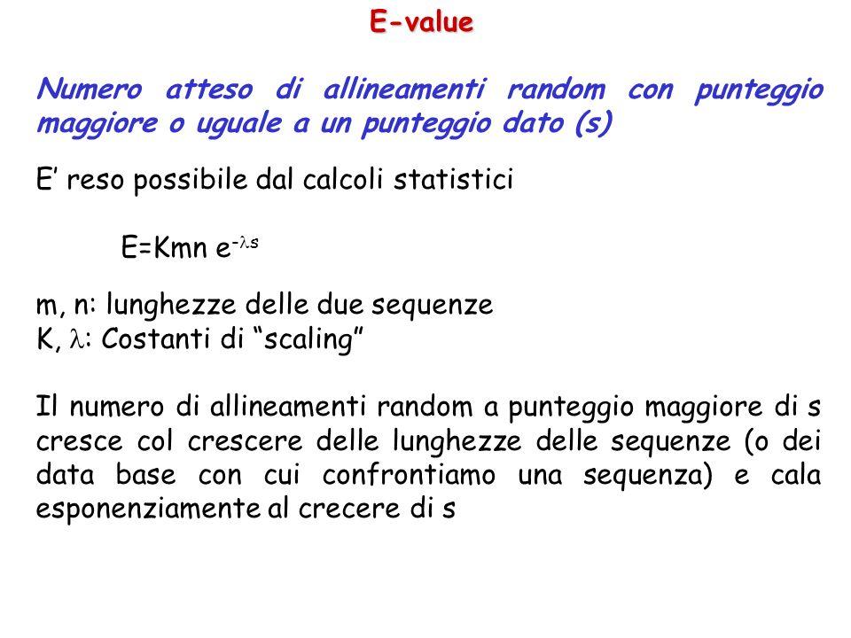 E-value Numero atteso di allineamenti random con punteggio maggiore o uguale a un punteggio dato (s) E reso possibile dal calcoli statistici E=Kmn e - s m, n: lunghezze delle due sequenze K, : Costanti di scaling Il numero di allineamenti random a punteggio maggiore di s cresce col crescere delle lunghezze delle sequenze (o dei data base con cui confrontiamo una sequenza) e cala esponenziamente al crecere di s