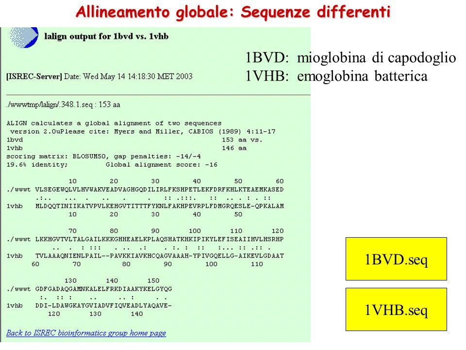 Allineamento globale: Sequenze differenti 1BVD.seq 1VHB.seq 1BVD: mioglobina di capodoglio 1VHB: emoglobina batterica