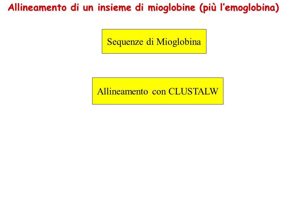 Allineamento di un insieme di mioglobine (più lemoglobina) Sequenze di Mioglobina Allineamento con CLUSTALW