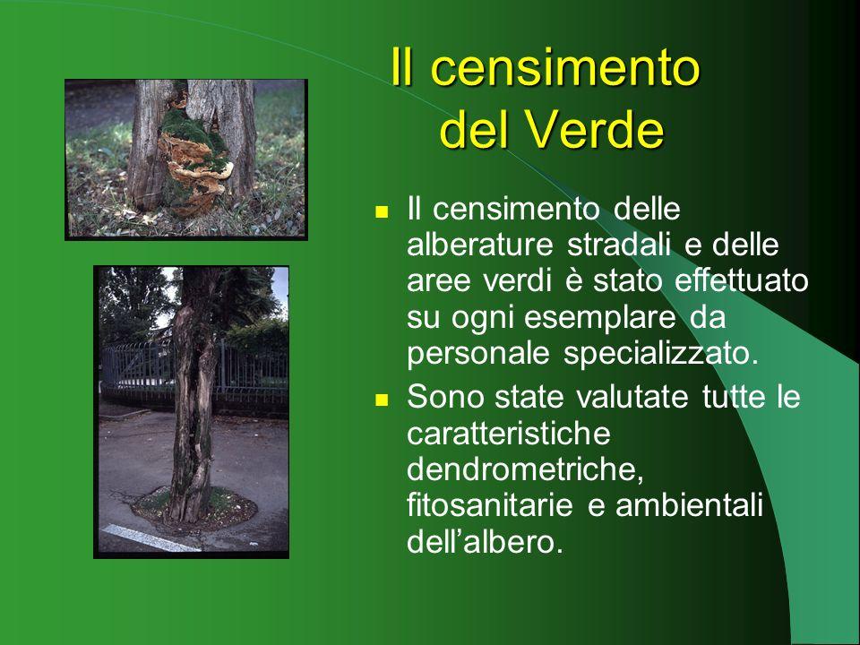 Il censimento delle alberature stradali e delle aree verdi è stato effettuato su ogni esemplare da personale specializzato.