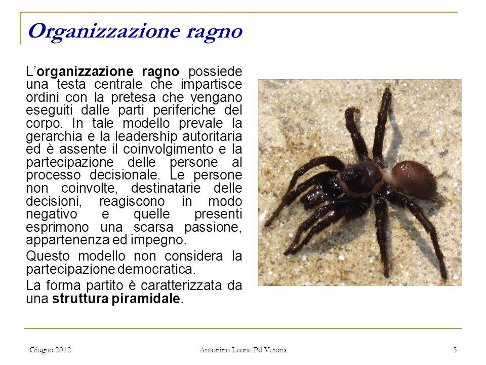 Giugno 2012 Antonino Leone Pd Verona 5 Lorganizzazione ragno possiede una testa centrale che impartisce ordini con la pretesa che vengano eseguiti dalle parti periferiche del corpo.