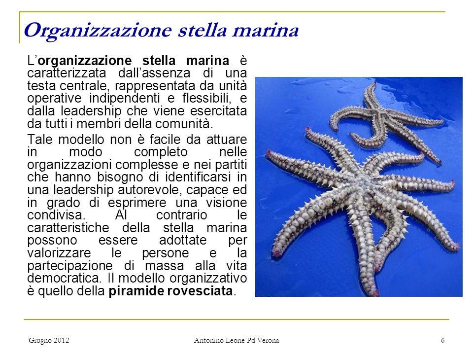 Giugno 2012 Antonino Leone Pd Verona 6 Lorganizzazione stella marina è caratterizzata dallassenza di una testa centrale, rappresentata da unità operative indipendenti e flessibili, e dalla leadership che viene esercitata da tutti i membri della comunità.