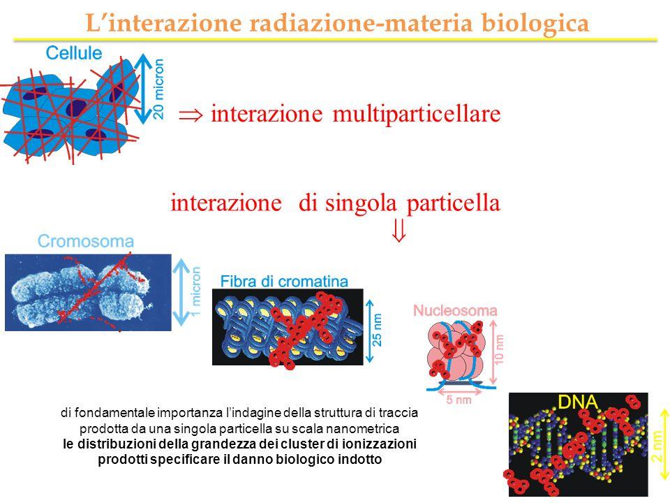 interazione multiparticellare interazione di singola particella Linterazione radiazione-materia biologica di fondamentale importanza lindagine della s