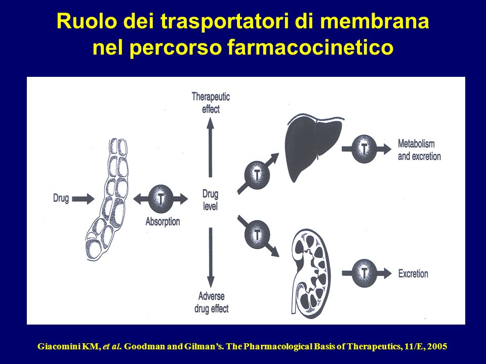 Ruolo dei trasportatori di membrana nel percorso farmacocinetico Giacomini KM, et al. Goodman and Gilmans. The Pharmacological Basis of Therapeutics,