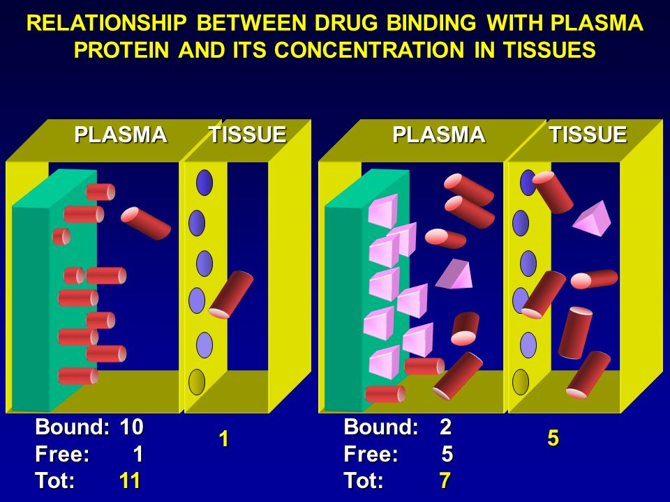 PLASMATISSUEPLASMATISSUE Bound: 10 Free: 1 Tot: 11 Bound: 2 Free: 5 Tot: 7 1 5 RELATIONSHIP BETWEEN DRUG BINDING WITH PLASMA PROTEIN AND ITS CONCENTRA
