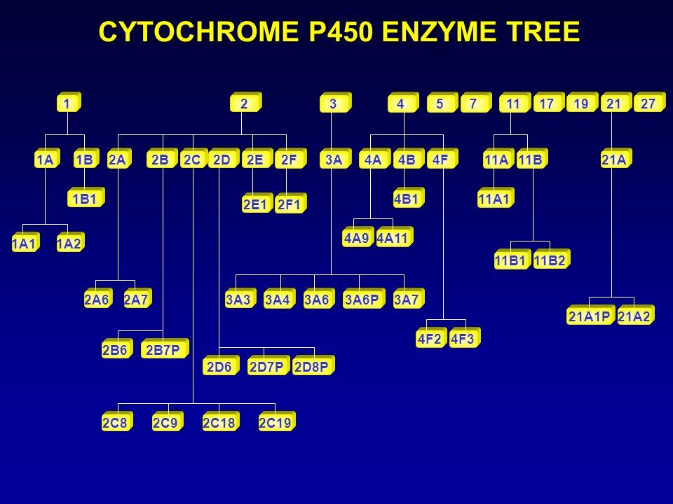 CYTOCHROME P450 ENZYME TREE 1 2A 2A6 2 2F2E2D2C2B 2A7 1A1B 1A11A2 2C19 1B1 2C8 2B7P2B6 2C92C18 2D8P2D7P2D6 2E12F1 3 3A 3A73A6P3A63A43A3 1719212711754