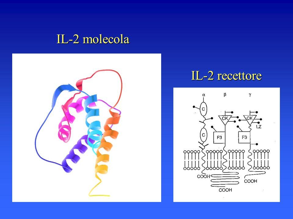 IL-2 molecola IL-2 recettore