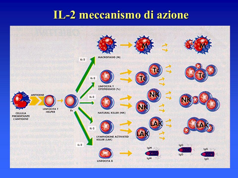 IL-2 meccanismo di azione