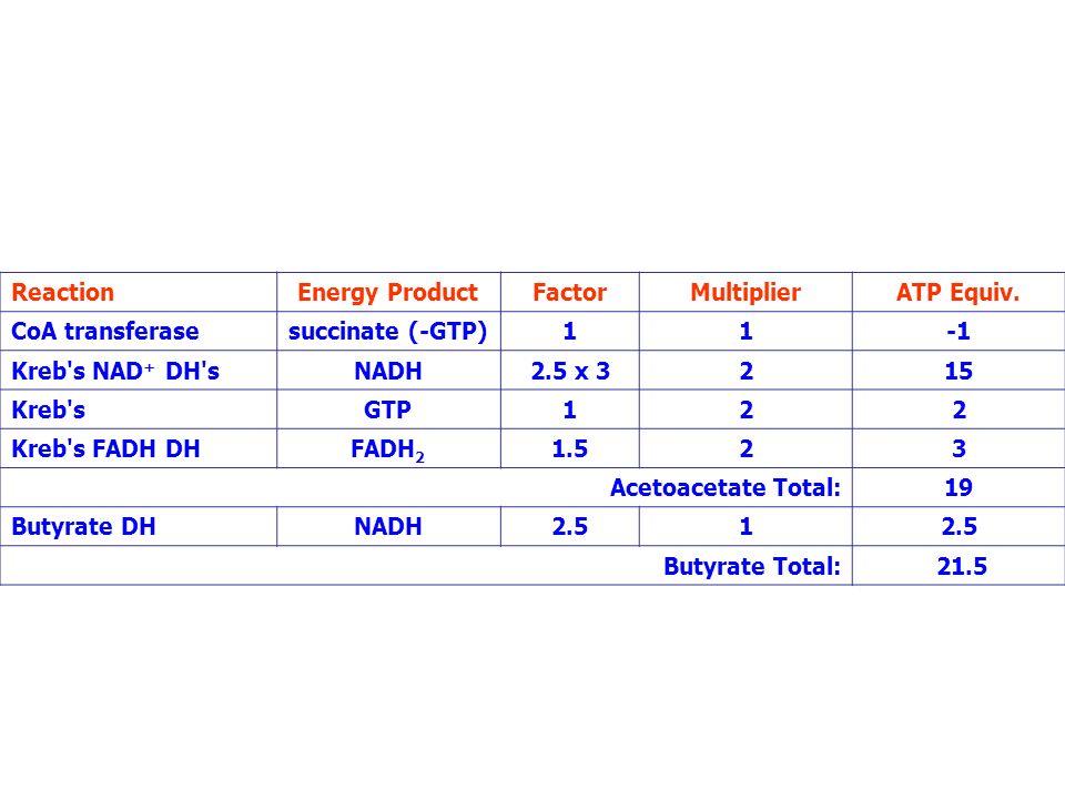 ReactionEnergy ProductFactorMultiplierATP Equiv. CoA transferasesuccinate (-GTP)11 Kreb's NAD + DH'sNADH2.5 x 3215 Kreb'sGTP122 Kreb's FADH DHFADH 2 1