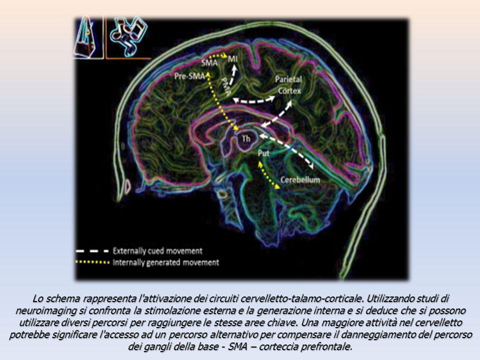 Lo schema rappresenta l'attivazione dei circuiti cervelletto-talamo-corticale. Utilizzando studi di neuroimaging si confronta la stimolazione esterna
