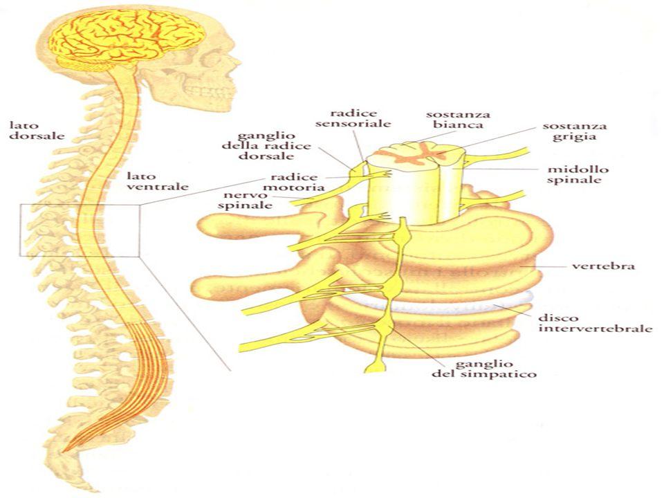 L utilizzo degli stimoli ritmici (stimolazione uditiva) nel paziente affetto da PD risulta essere più efficace rispetto ad altri tipi di stimolazione, come quella visiva, somatosensoriale (tattile) o uditiva combinata a segnali visivi.