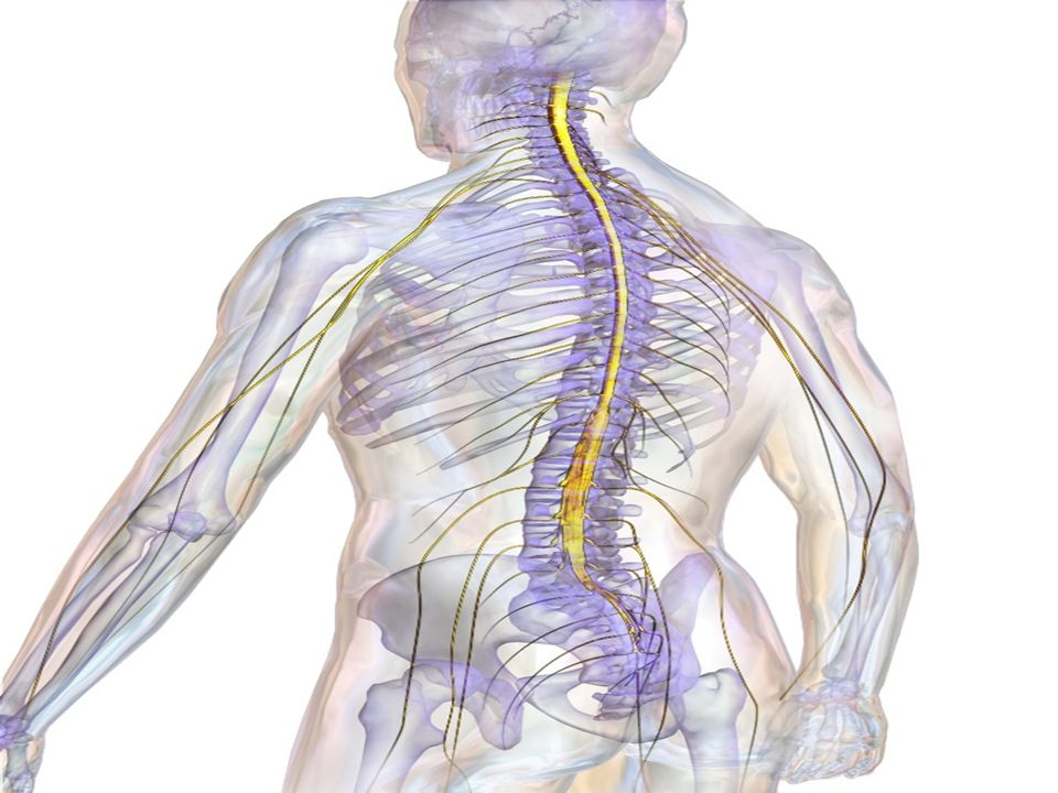 La RAS utilizza un semplice metronomo che batte abbinato allandatura del paziente.