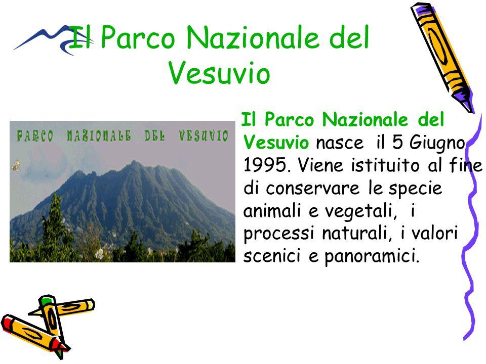 Il Parco Nazionale del Vesuvio Il Parco Nazionale del Vesuvio nasce il 5 Giugno 1995. Viene istituito al fine di conservare le specie animali e vegeta