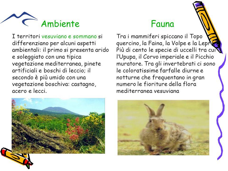 I territori vesuviano e sommano si differenziano per alcuni aspetti ambientali: il primo si presenta arido e soleggiato con una tipica vegetazione med