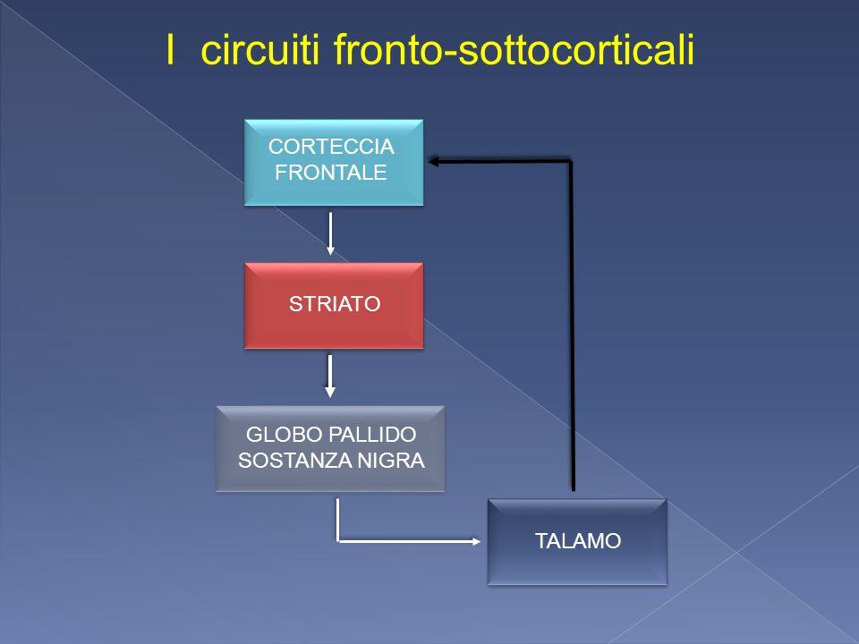 CORTECCIA FRONTALE GLOBO PALLIDO SOSTANZA NIGRA STRIATO I circuiti fronto-sottocorticali TALAMO