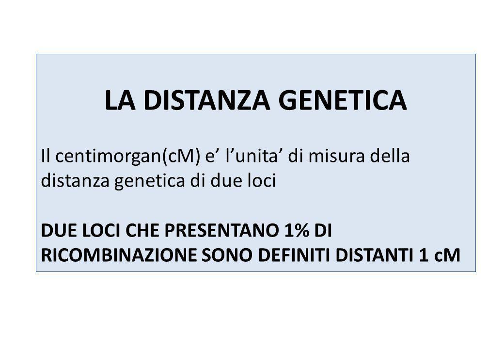 LA DISTANZA GENETICA Il centimorgan(cM) e lunita di misura della distanza genetica di due loci DUE LOCI CHE PRESENTANO 1% DI RICOMBINAZIONE SONO DEFIN