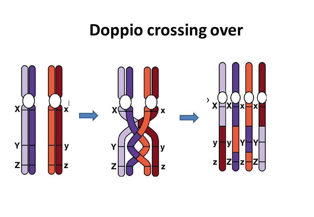Doppio crossing over